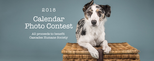 Calendar Photography Submissions : Calendar photo contest cascades humane society