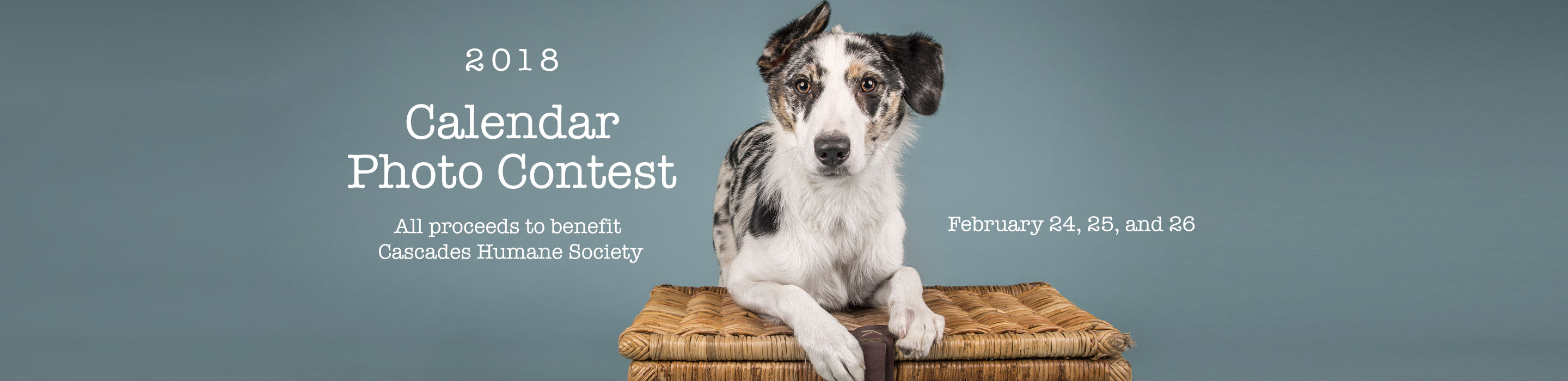 Calendar Photography Contest : Cascades humane society connecting animals in need with